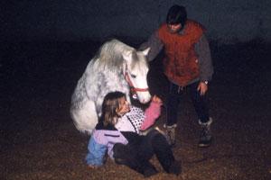 belohnung der pferde
