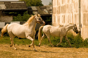 schimmeliges heu folgen pferd