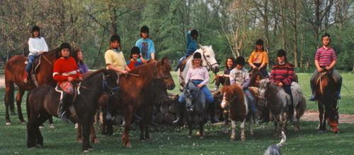 beruhigung für pferde